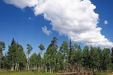 02 Kaibab forest